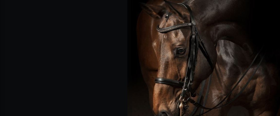 Farriers Equine Care